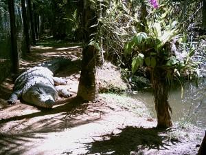 Streicheltier im Zoo Cairns?